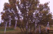 Squelette Hangin ' arbre