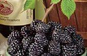 Vin savoureux faits maison blackberry