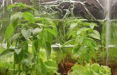 Petite plante couverte de LED Grow Room