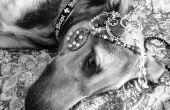 Black & White - Photos pour animaux de compagnie de téléphone cellulaire, partie 2