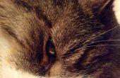 Comment à prendre Super bonnes photos de chats