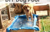 Piscine bricolage chien