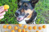 Patate douce chien traite recette