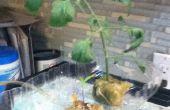 Super facile système aquaponique