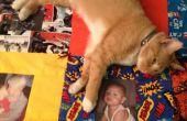 Créer un câlin mémoire Quilt (chat non inclus)