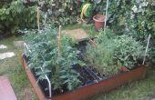 Dix façons de protéger votre jardin bio contre les parasites
