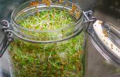 36 idées de jardin intérieur cool pour cultiver des aliments