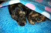DIY lit de chien (ou chat lit)