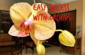 Succès facile des orchidées