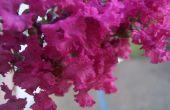 Belles fleurs de mon jardin