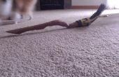 Comment jouer au Quidditch