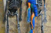Muscle anatomie avec Sugru et un squelette d'Halloween