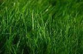 Visez vert de croissance verte : Comment faire pour extraire l'énergie d'herbe