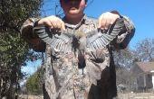 Comment faire pour la chasse et la cueillette