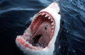 Comment lutter contre un requin !