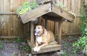 Véranda de chien toit vert