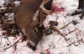Comment faire pour la chasse au cerf