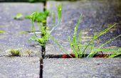 Una opcion biodégradable y segura de herbicida comercial