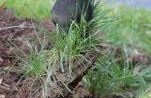 Truc de soin de pelouse que vous devez savoir : branler il, sprig il