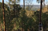 BRICOLAGE arbre MANOR - Australia Day prêt