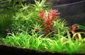 Mélangeur de CO2 pour aquarium planté