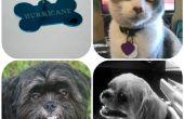 Mise à jour de tag pour animaux de compagnie - facile, rapide, & pas cher !