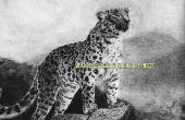 Comment dessiner un Amur Leopard sur papier Pastel