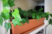 Système d'arrosage automatique plante