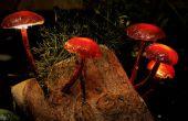 Enchanted Forest lumières champignons