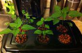 Jardin d'herbes aromatiques hydroponique pas cher et facile
