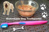 Dentifrice maison pour les chiens !