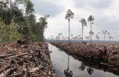 L'environnement-que pouvez-vous faire ? RECYCLER les