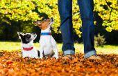 Dressage de chiens conseils faciles et commandes
