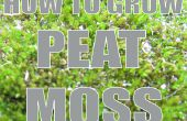 How To Grow : Peat Moss