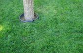 Comment plante eau Saver RTF semence à gazon