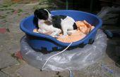 Aéroglisseur chiens lit