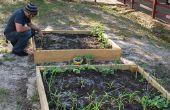 Jardins de légumes pour l'éducation