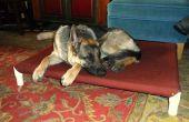 Élevé de lit de chien