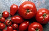 Comment faire un plat facile, délicieux, tomate.