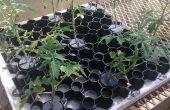 Le collier de plante (Germination) étonnante pour aquaponique et culture hydroponique