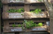 Jardin d'herbes aromatiques famille