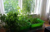 Jardin d'herbes aromatiques intérieure avec arrosage automatique