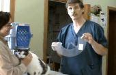 Comment mettre un collier élisabéthain sur un chat