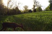 Comment faire un terrain de nourriture de blé d'hiver à Deer