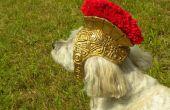 Casque de gladiateur romain pour chiens