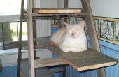 Recyclé échelle chat arbre