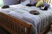 Comment à PACK et déplacer votre chat en toute sécurité à A nouvelle résidence