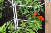 Comment : Faire des échelles de tomate de la grille de Salvia IKEA