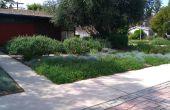 Étouffez et remplacer votre pelouse avec paillis