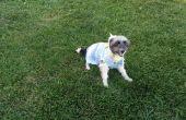 Pull chien fait facilement de drap de flanelle recyclée.